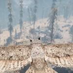 Обзор Far Cry Primal